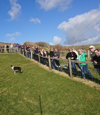 Watching Dingle Sheep Dog Trials