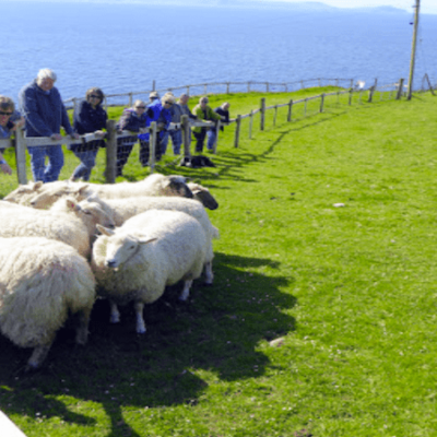 Dingle Pet Farm and Sheepdog Demonstrations