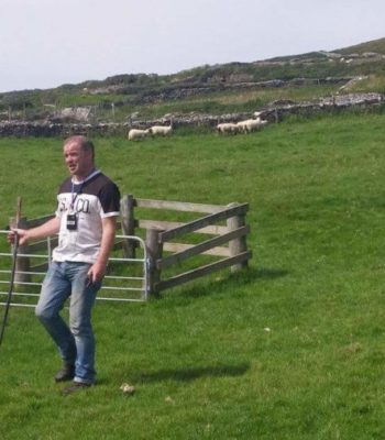 Dingle Sheepdogs Demonstrations & Trials