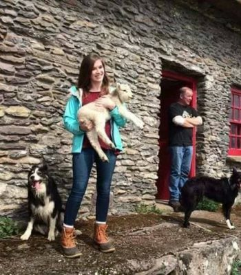 Adopt a baby lamb at the dingle Sheepdogs show