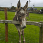 Dingle Pet farm and Open Farm