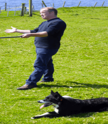 Sheep Herder with Dog in Dingle