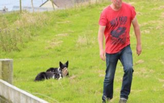 Sheep Farmer Walking the Land Before the Dingle Sheepdog Demonstrations Dingle Sheepdogs Show