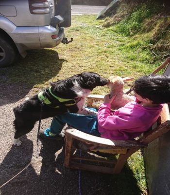 Dog with Lamb and Boy Relationship formed in Dingle